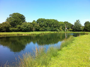 Sutton Springs Trout Fishery